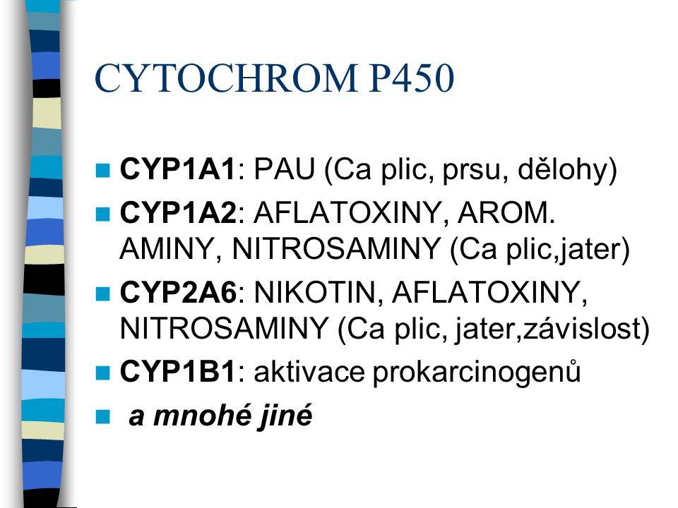 CYTOCHROM P450  CYP1A1: PAU (Ca plic, prsu, dělohy)  CYP1A2: AFLATOXINY, AROM. AMINY, NITROSAMINY (Ca plic,jater)  CYP2A6: NIKOTIN, AFLATOXINY, NIT
