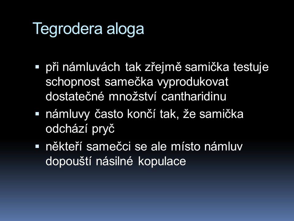 Tegrodera aloga  při námluvách tak zřejmě samička testuje schopnost samečka vyprodukovat dostatečné množství cantharidinu  námluvy často končí tak, že samička odchází pryč  někteří samečci se ale místo námluv dopouští násilné kopulace