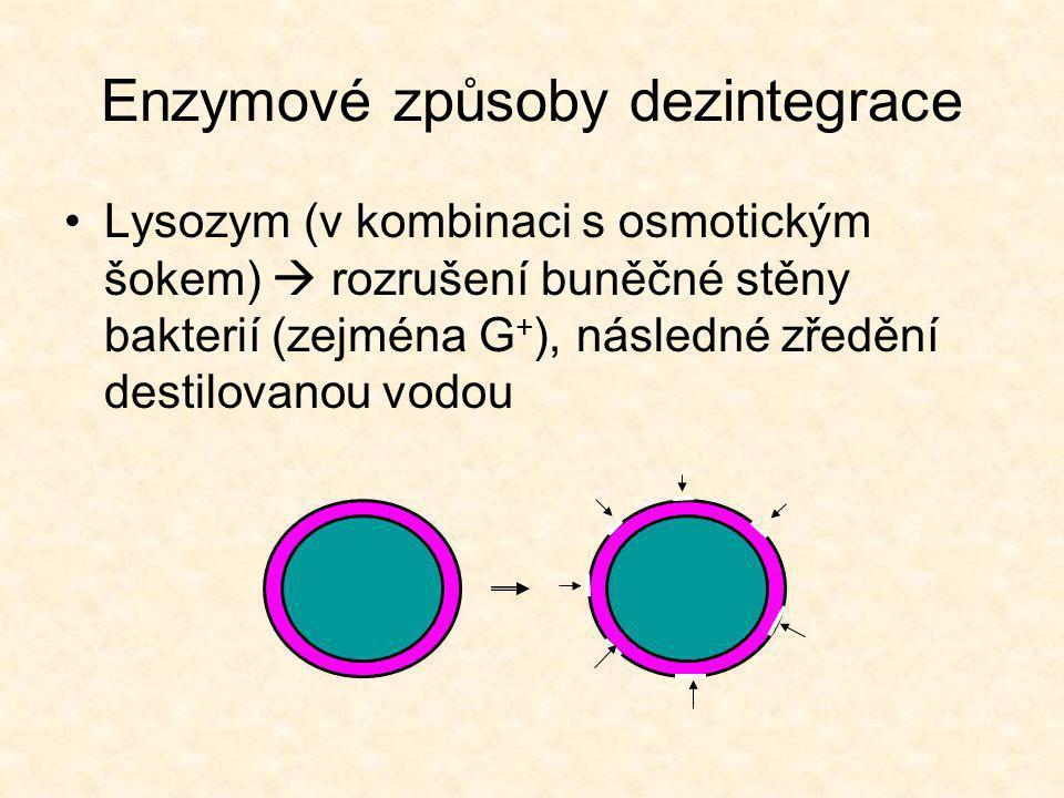 Enzymové způsoby dezintegrace •Lysozym (v kombinaci s osmotickým šokem)  rozrušení buněčné stěny bakterií (zejména G + ), následné zředění destilovanou vodou