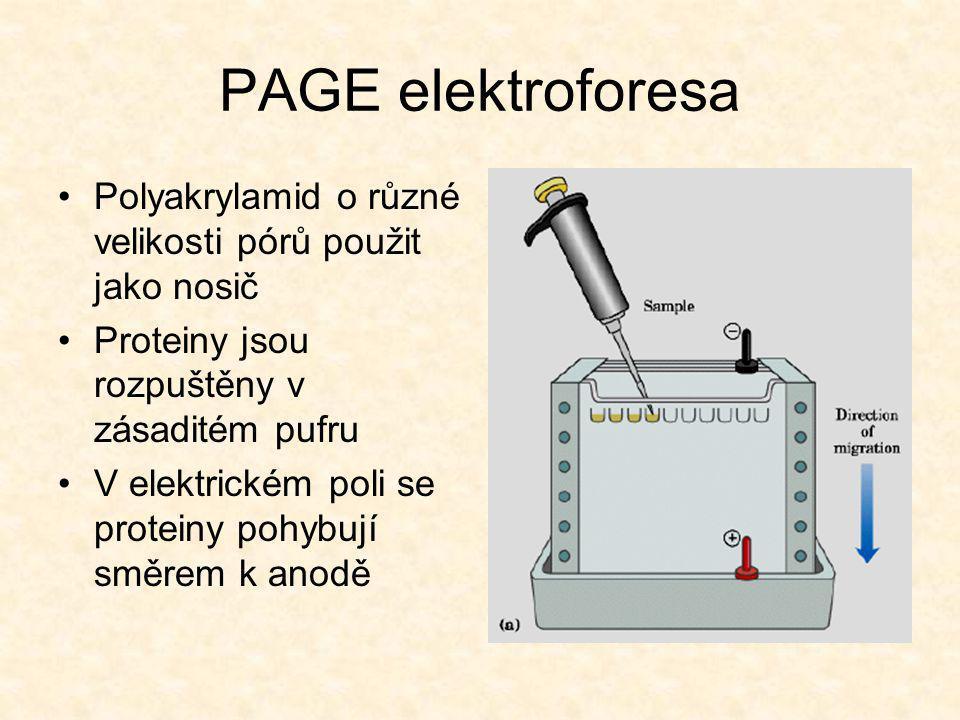 PAGE elektroforesa •Polyakrylamid o různé velikosti pórů použit jako nosič •Proteiny jsou rozpuštěny v zásaditém pufru •V elektrickém poli se proteiny pohybují směrem k anodě
