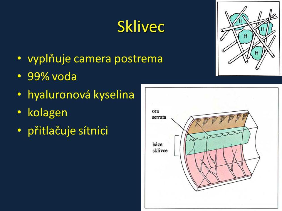 Sklivec • vyplňuje camera postrema • 99% voda • hyaluronová kyselina • kolagen • přitlačuje sítnici