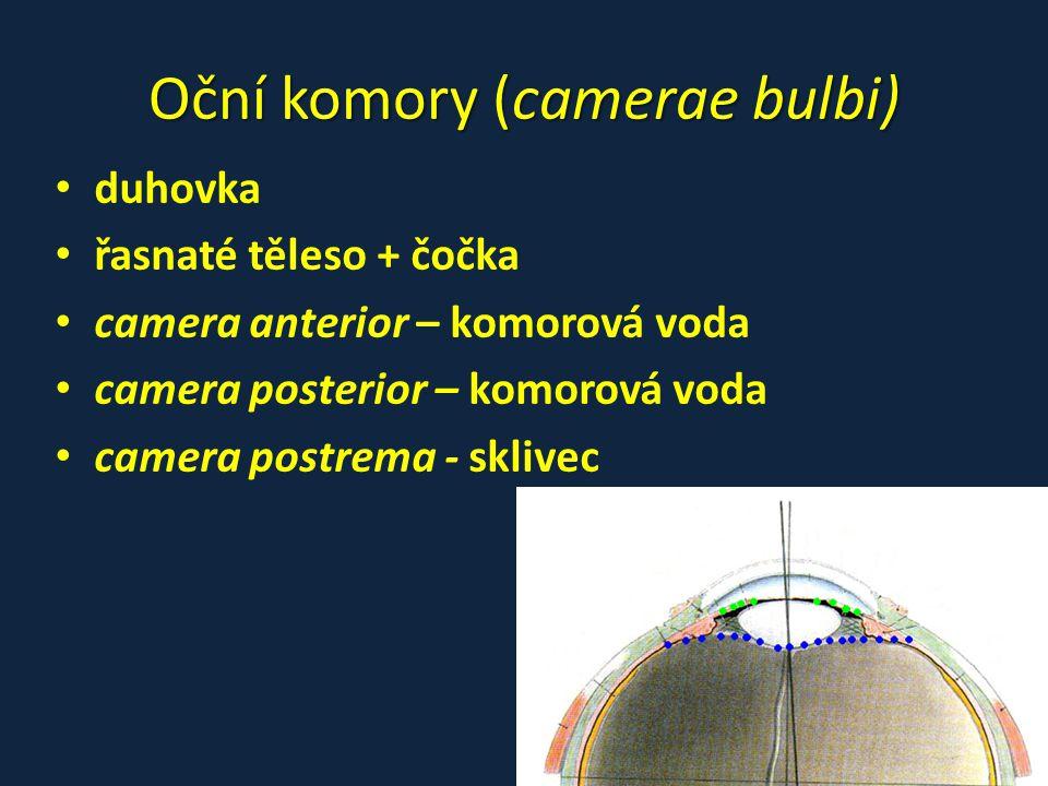 Oční komory (camerae bulbi) • duhovka • řasnaté těleso + čočka • camera anterior – komorová voda • camera posterior – komorová voda • camera postrema