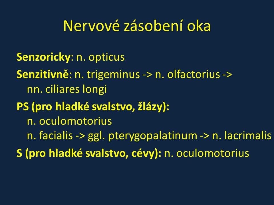 Nervové zásobení oka Senzoricky: n. opticus Senzitivně: n. trigeminus -> n. olfactorius -> nn. ciliares longi PS (pro hladké svalstvo, žlázy): n. ocul