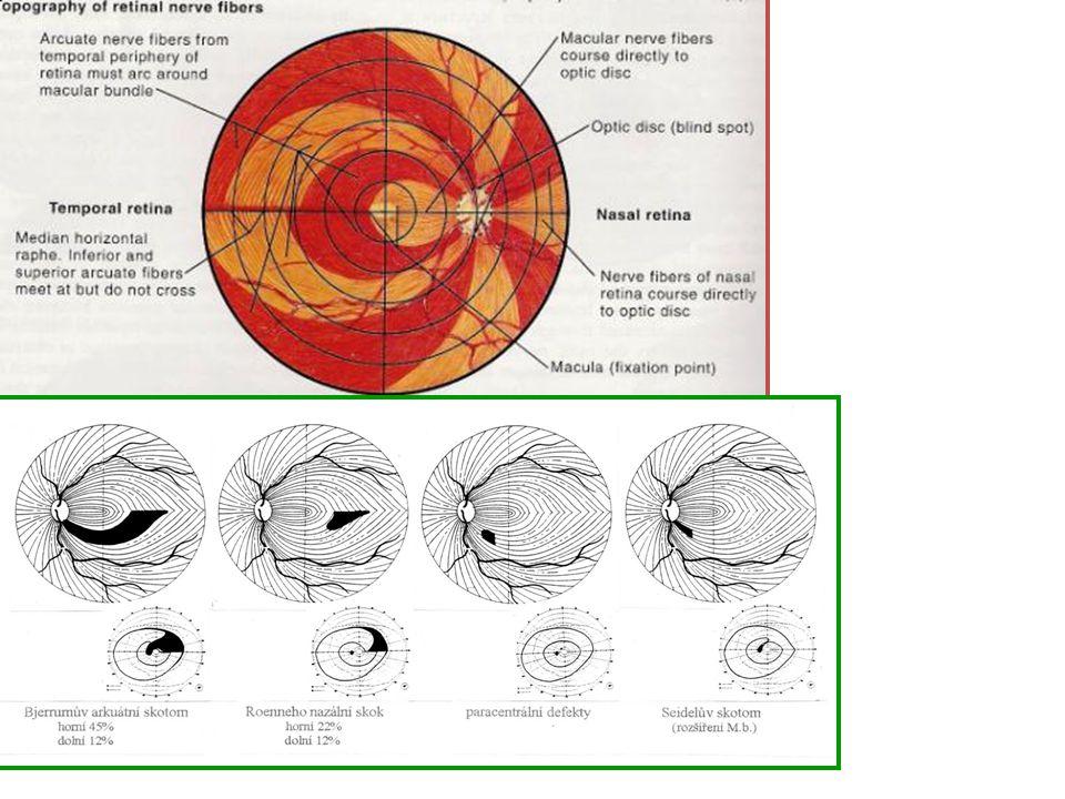 Zraková dráha