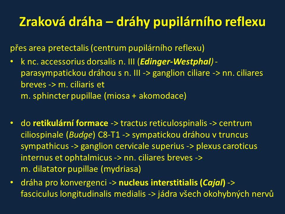Zraková dráha – dráhy pupilárního reflexu přes area pretectalis (centrum pupilárního reflexu) • k nc. accessorius dorsalis n. III (Edinger-Westphal) -