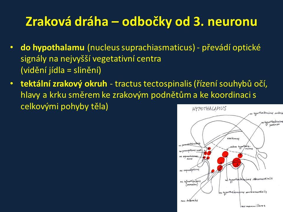 Zraková dráha – odbočky od 3. neuronu • do hypothalamu (nucleus suprachiasmaticus) - převádí optické signály na nejvyšší vegetativní centra (vidění jí