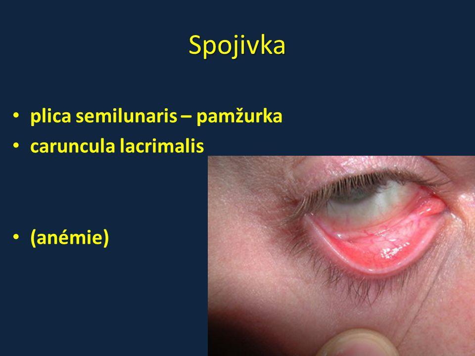 Spojivka • plica semilunaris – pamžurka • caruncula lacrimalis • (anémie)