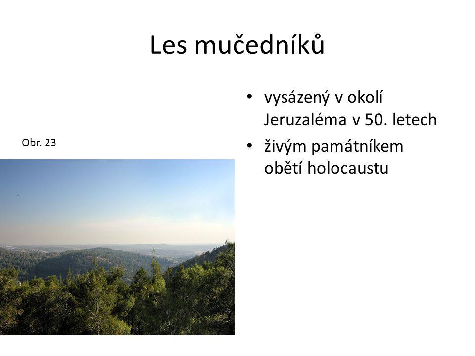 Les mučedníků • vysázený v okolí Jeruzaléma v 50. letech • živým památníkem obětí holocaustu Obr. 23