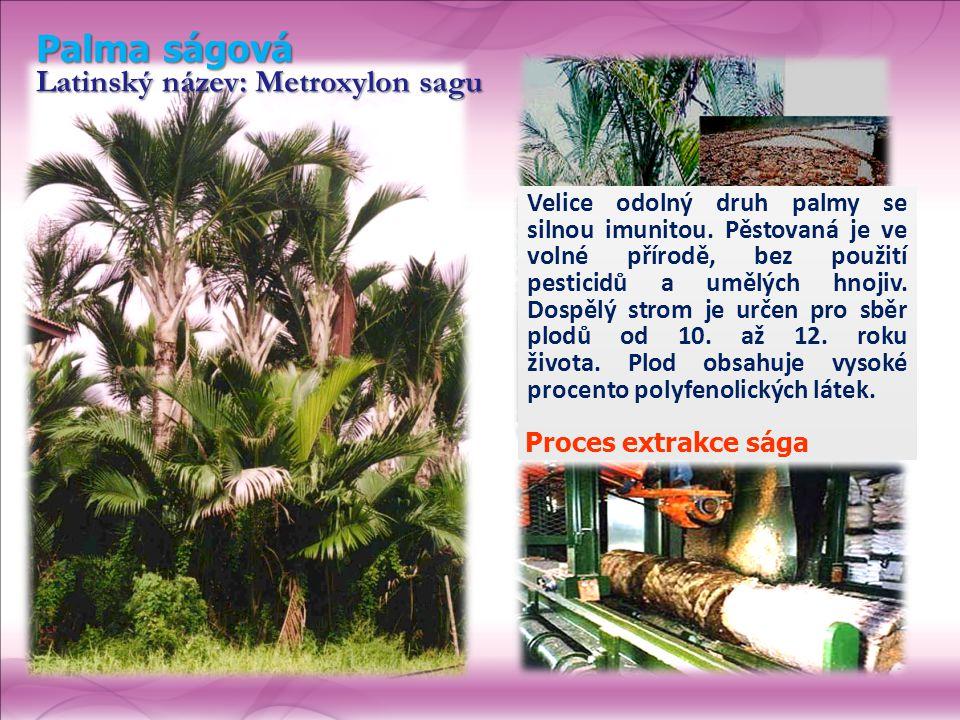 Palma ságová Latinský název: Metroxylon sagu Velice odolný druh palmy se silnou imunitou. Pěstovaná je ve volné přírodě, bez použití pesticidů a umělý