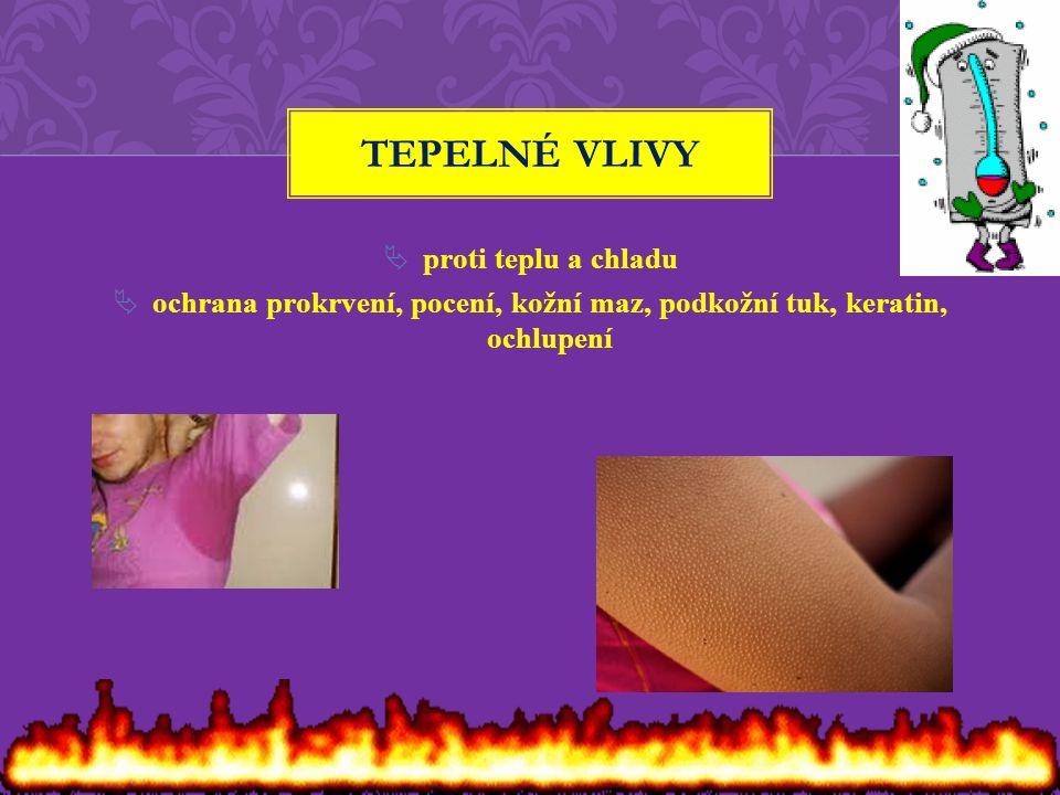  proti teplu a chladu  ochrana prokrvení, pocení, kožní maz, podkožní tuk, keratin, ochlupení TEPELNÉ VLIVY
