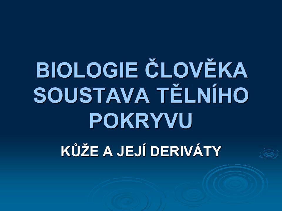 BIOLOGIE ČLOVĚKA SOUSTAVA TĚLNÍHO POKRYVU KŮŽE A JEJÍ DERIVÁTY