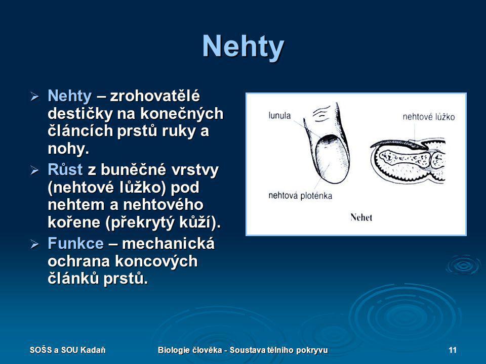 SOŠS a SOU KadaňBiologie člověka - Soustava tělniho pokryvu11 Nehty  Nehty – zrohovatělé destičky na konečných článcích prstů ruky a nohy.  Růst z b