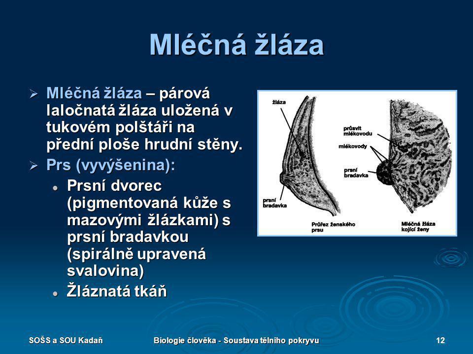 SOŠS a SOU KadaňBiologie člověka - Soustava tělniho pokryvu12 Mléčná žláza  Mléčná žláza – párová laločnatá žláza uložená v tukovém polštáři na přední ploše hrudní stěny.