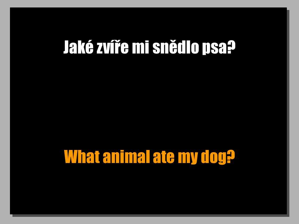 Jaké zvíře mi snědlo psa? What animal ate my dog?