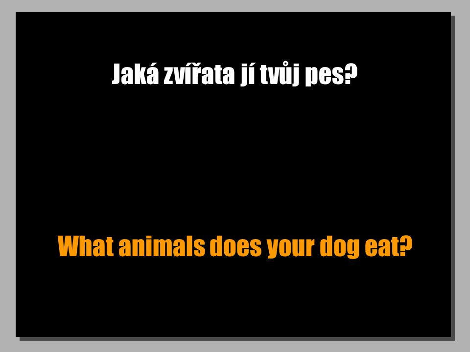 Jaká zvířata jí tvůj pes What animals does your dog eat