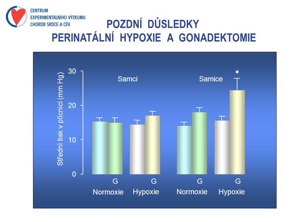 POZDNÍ DŮSLEDKY PERINATÁLNÍ HYPOXIE A GONADEKTOMIE Samci 0 10 20 30 Střední tlak v plícnici (mm Hg ) Samice Normoxie HypoxieNormoxieHypoxie GGGG 
