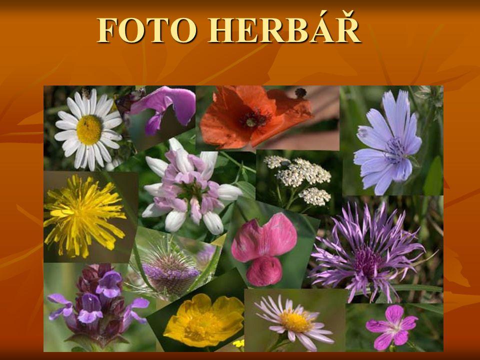 FOTO HERBÁŘ