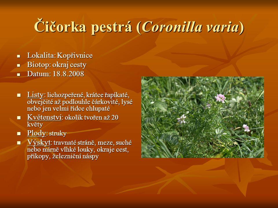 Čičorka pestrá (Coronilla varia)  Lokalita: Kopřivnice  Biotop: okraj cesty  Datum: 18.8.2008  Listy: lichozpeřené, krátce řapíkaté, obvejčité až podlouhle čárkovité, lysé nebo jen velmi řídce chlupaté  Květenství: okolík tvořen až 20 květy  Plody: struky  Výskyt: travnaté stráně, meze, suché nebo mírně vlhké louky, okraje cest, příkopy, železniční náspy