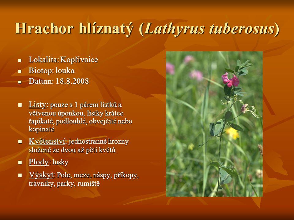 Hrachor hlíznatý (Lathyrus tuberosus)  Lokalita: Kopřivnice  Biotop: louka  Datum: 18.8.2008  Listy: pouze s 1 párem lístků a větvenou úponkou, lí