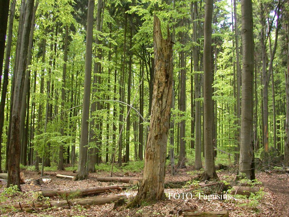 Strom je dřevina.To znamená, že je z větší části ze dřeva.