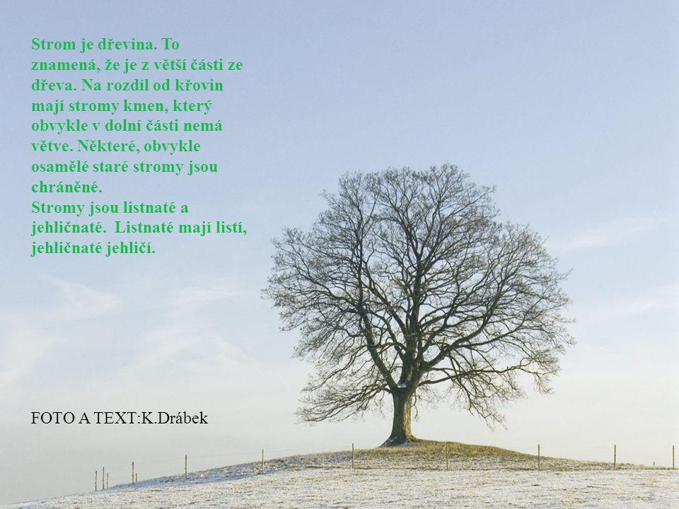 Když je stromů hodně, říkáme tomu les.Les z jehličnatých stromů se jmenuje jehličnatý les.