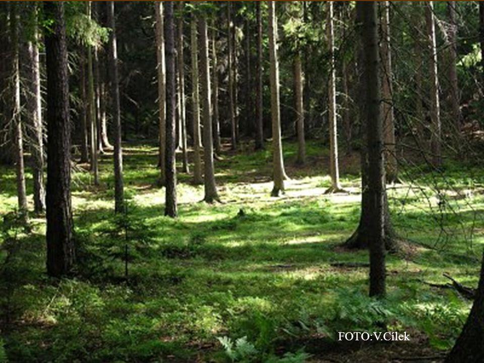Les složený z listnatých stromů je listnatý les.Listí na zimu opadává.