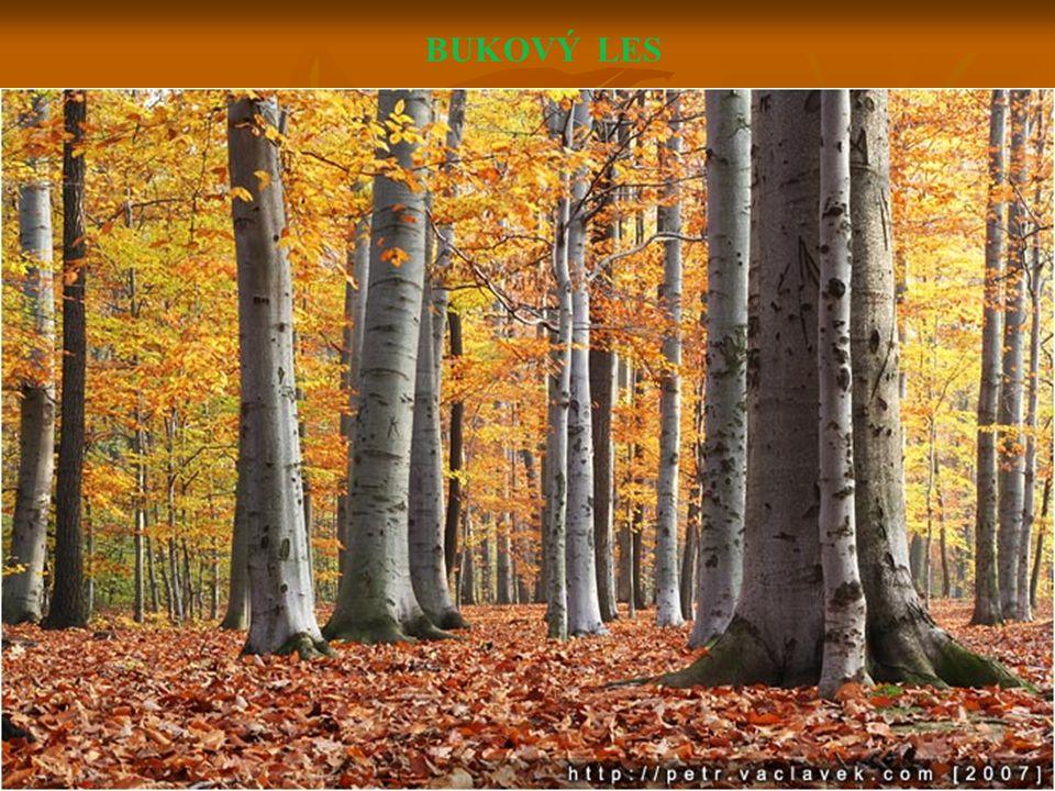 Les s listnatými i jehličnatými stromy je les smíšený.