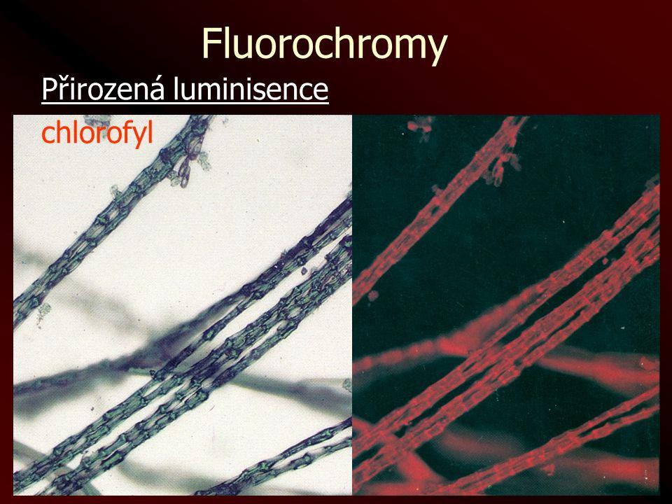 Fluorochromy Přirozená luminisence chlorofyl