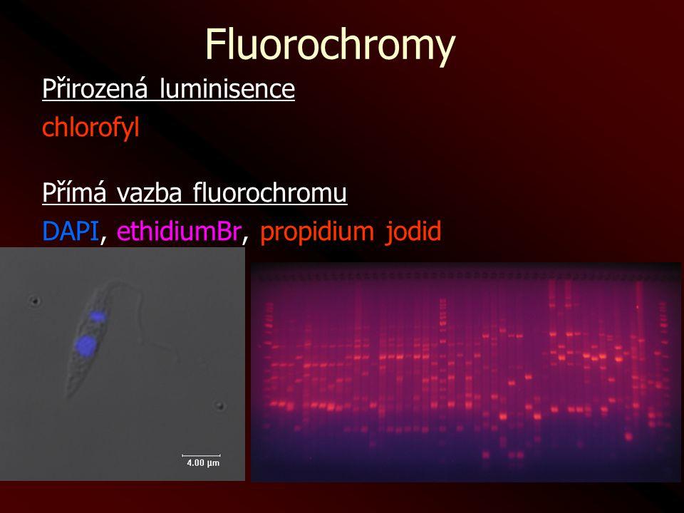 Fluorochromy Přirozená luminisence chlorofyl Přímá vazba fluorochromu DAPI, ethidiumBr, propidium jodid