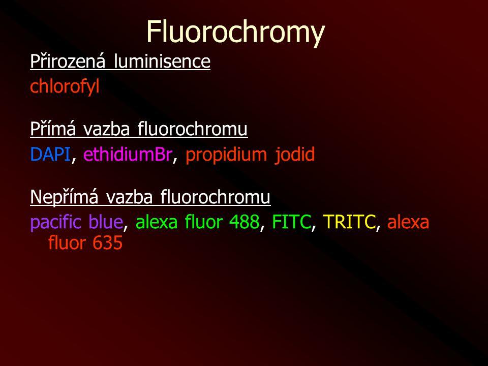 Fluorochromy Přirozená luminisence chlorofyl Přímá vazba fluorochromu DAPI, ethidiumBr, propidium jodid Nepřímá vazba fluorochromu pacific blue, alexa