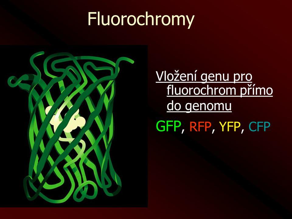 Vložení genu pro fluorochrom přímo do genomu GFP, RFP, YFP, CFP Fluorochromy