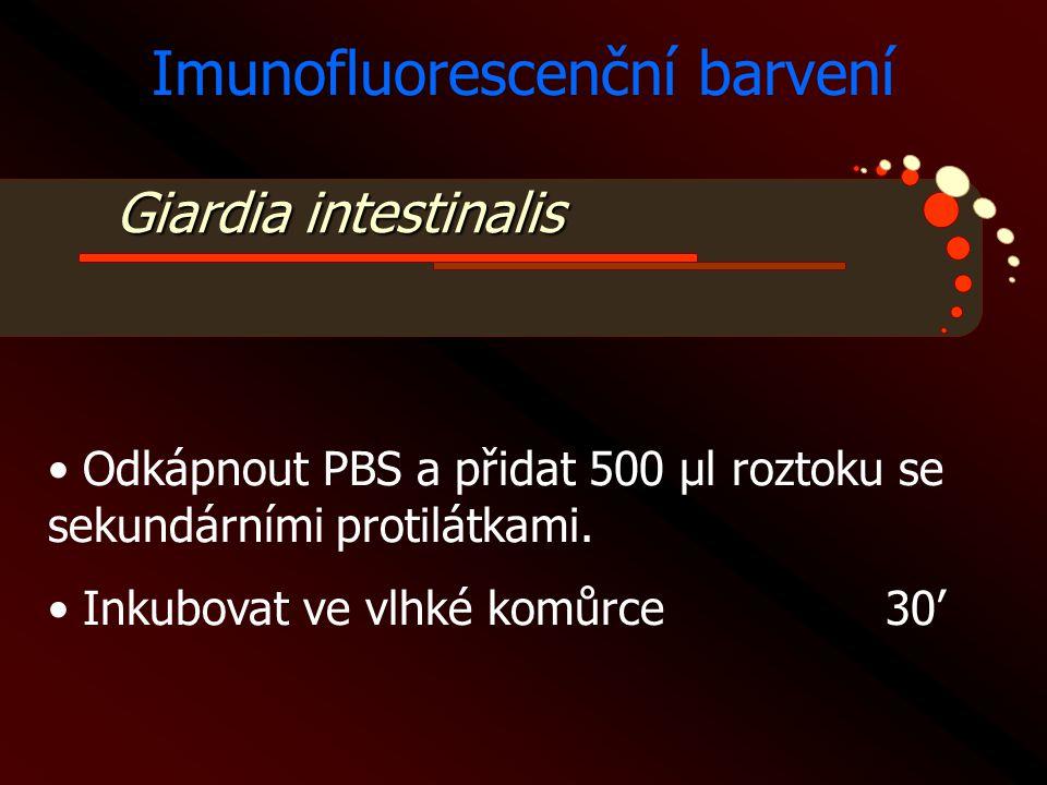Giardia intestinalis Imunofluorescenční barvení • Odkápnout PBS a přidat 500 μl roztoku se sekundárními protilátkami. • Inkubovat ve vlhké komůrce30'