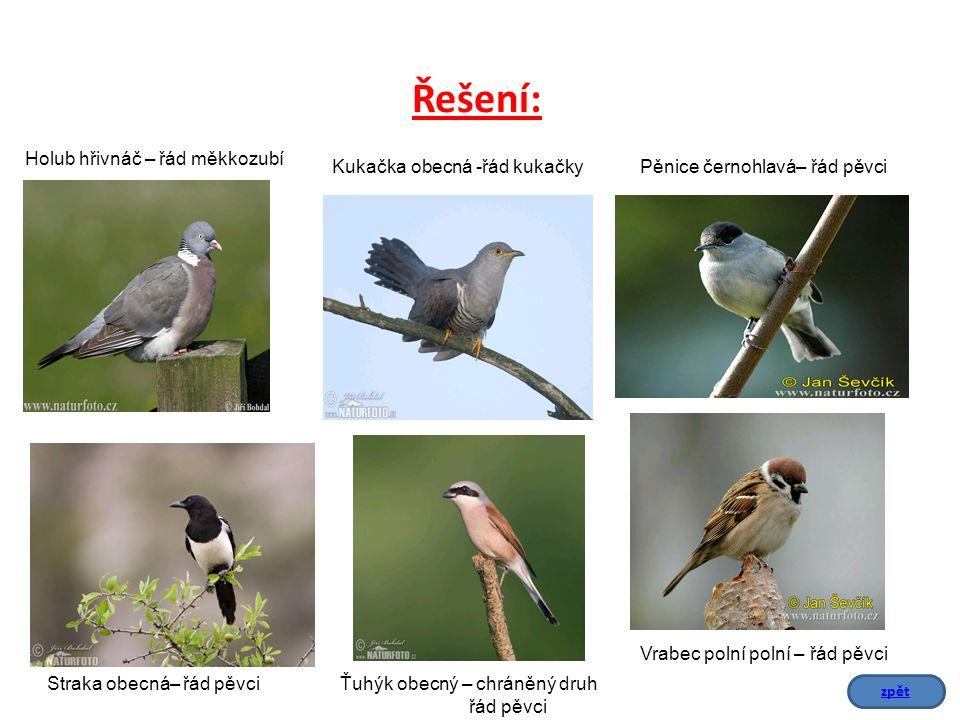 Podle nápovědy urči, o který druh se jedná.Označ, který druh je chráněný.