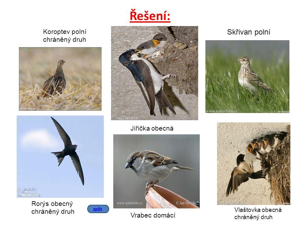Řešení: Koroptev polní chráněný druh Rorýs obecný chráněný druh Skřivan polní Jiřička obecná Vlaštovka obecná chráněný druh Vrabec domácí zpět
