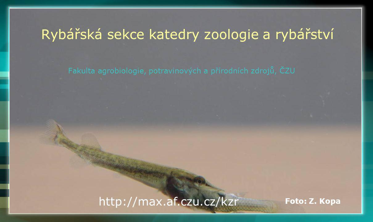 Rybářská sekce katedry zoologie a rybářství Fakulta agrobiologie, potravinových a přírodních zdrojů, ČZU http://max.af.czu.cz/kzr Foto: Z. Kopa