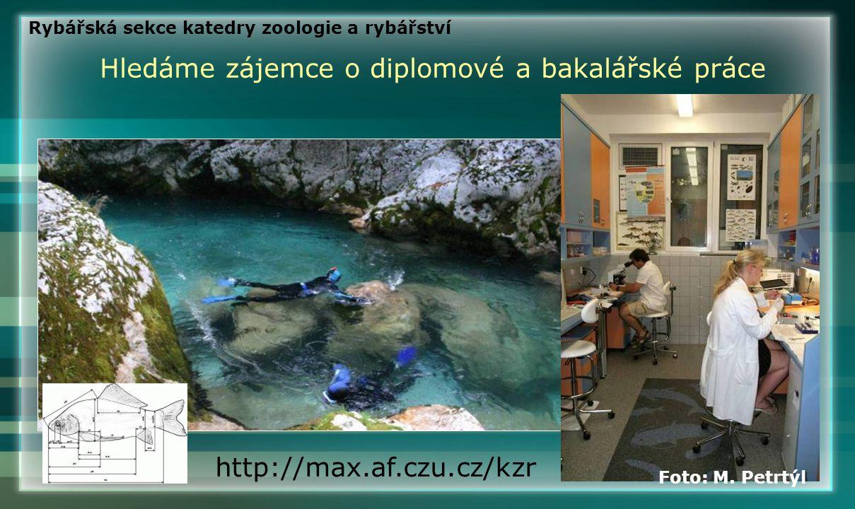 Hledáme zájemce o diplomové a bakalářské práce http://max.af.czu.cz/kzr Foto: M. Petrtýl Rybářská sekce katedry zoologie a rybářství