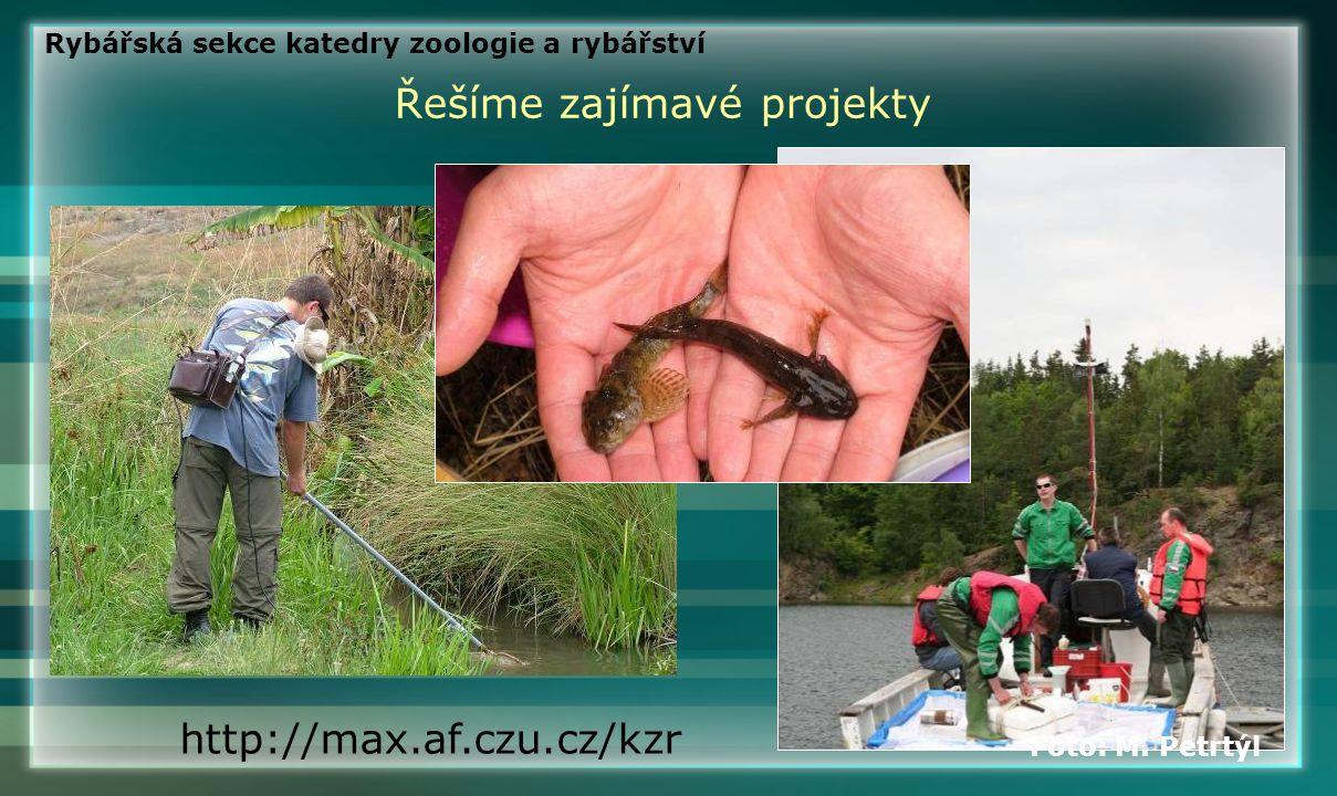 Řešíme zajímavé projekty http://max.af.czu.cz/kzr Foto: M. Petrtýl Rybářská sekce katedry zoologie a rybářství