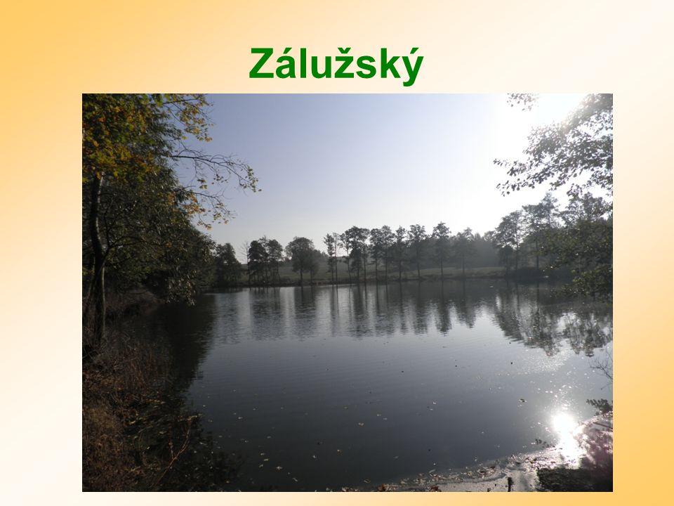 Zálužský