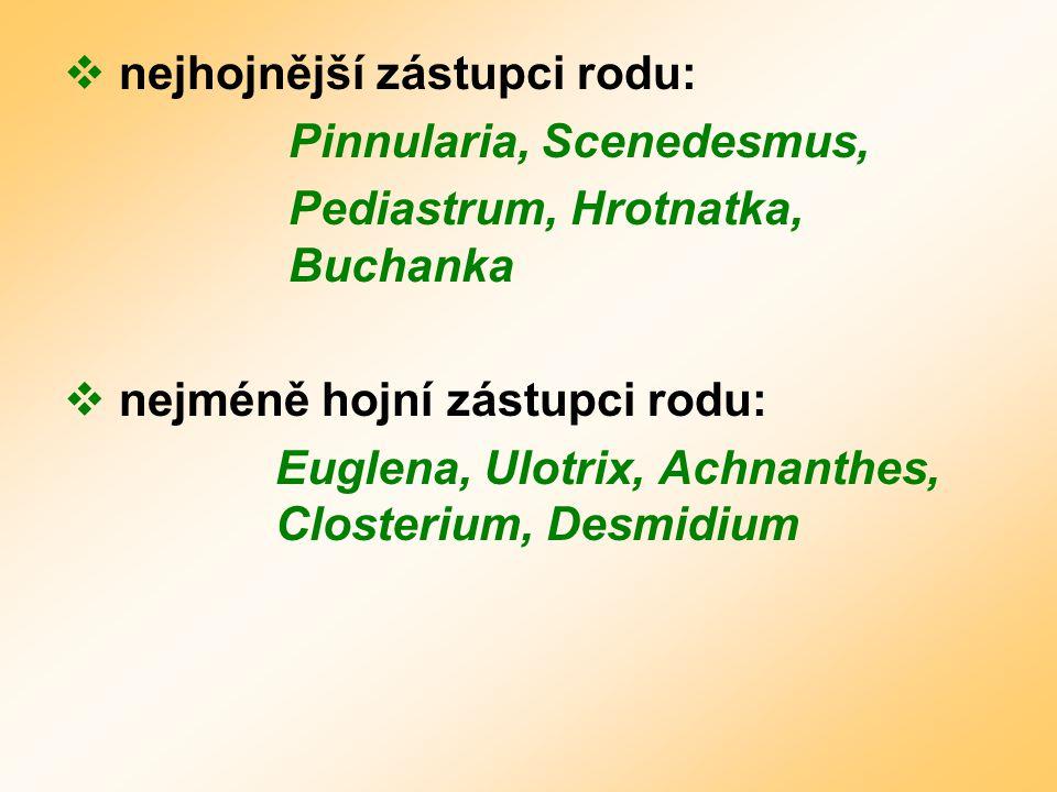  nejhojnější zástupci rodu: Pinnularia, Scenedesmus, Pediastrum, Hrotnatka, Buchanka  nejméně hojní zástupci rodu: Euglena, Ulotrix, Achnanthes, Closterium, Desmidium