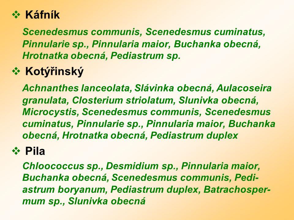  Káfník Scenedesmus communis, Scenedesmus cuminatus, Pinnularie sp., Pinnularia maior, Buchanka obecná, Hrotnatka obecná, Pediastrum sp.
