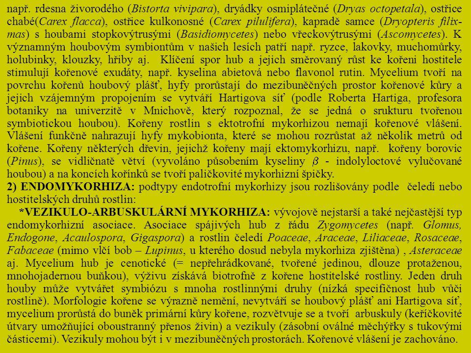 * ORCHIDEOIDNÍ MYKORHIZA: endomykorhizní asociace zástupců čeledi Orchidaceae s houbami z řádu Basidiomycetes (Rhizoctonia sp.