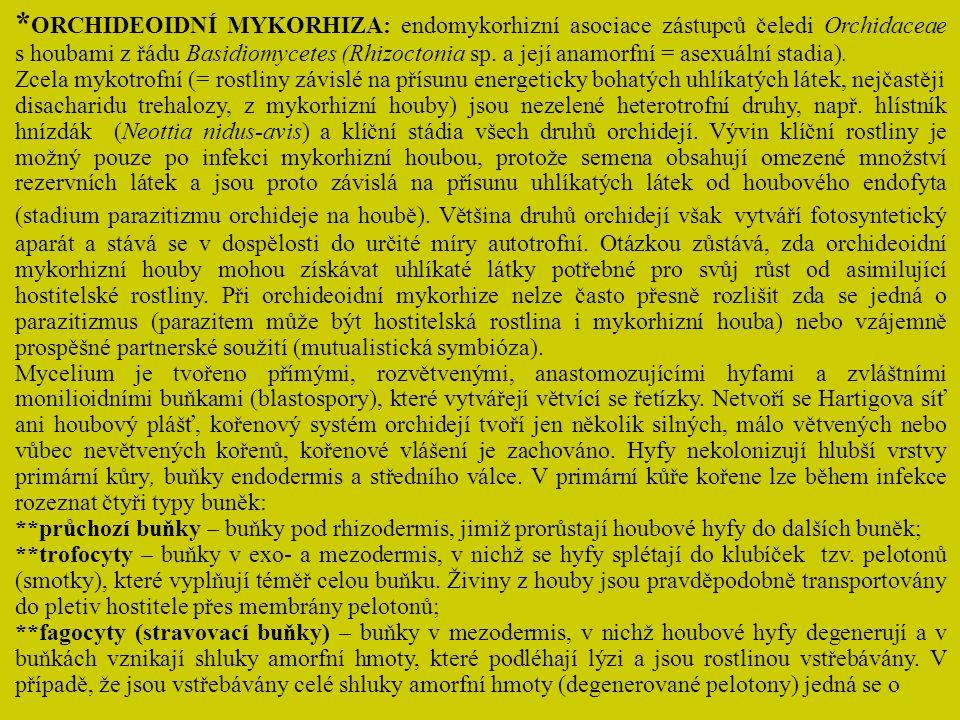 * ORCHIDEOIDNÍ MYKORHIZA: endomykorhizní asociace zástupců čeledi Orchidaceae s houbami z řádu Basidiomycetes (Rhizoctonia sp. a její anamorfní = asex