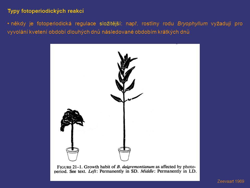 Zeevaart 1969 Typy fotoperiodických reakcí • někdy je fotoperiodická regulace složitější: např. rostliny rodu Bryophyllum vyžadují pro vyvolání kveten