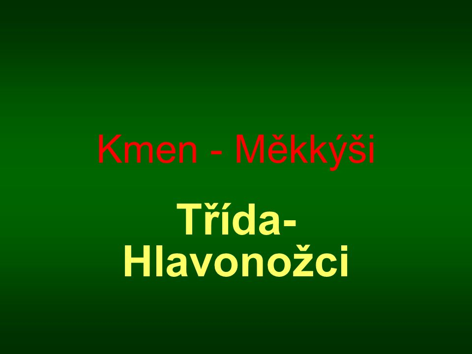 Kmen - Měkkýši Třída- Hlavonožci