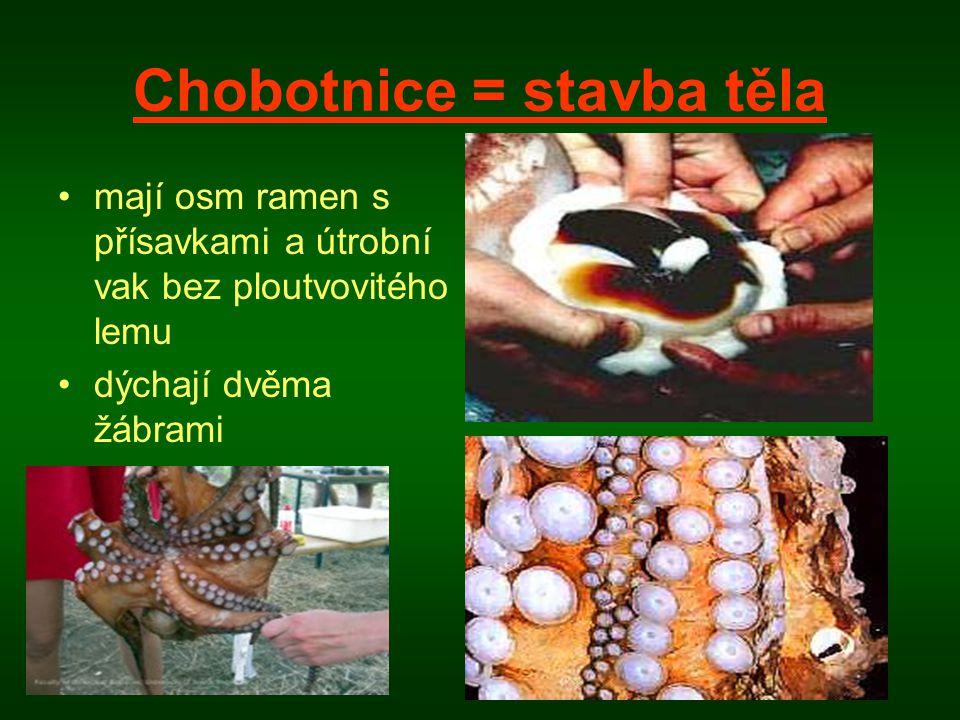 Chobotnice = stavba těla •mají osm ramen s přísavkami a útrobní vak bez ploutvovitého lemu •dýchají dvěma žábrami