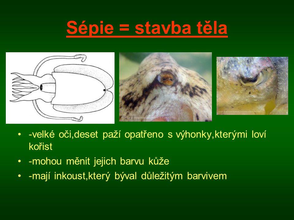 Sépie = stavba těla •-velké oči,deset paží opatřeno s výhonky,kterými loví kořist •-mohou měnit jejich barvu kůže •-mají inkoust,který býval důležitým