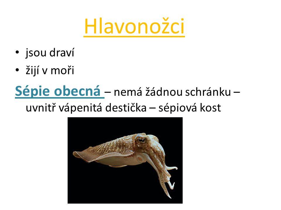 Hlavonožci • jsou draví • žijí v moři Sépie obecná – nemá žádnou schránku – uvnitř vápenitá destička – sépiová kost