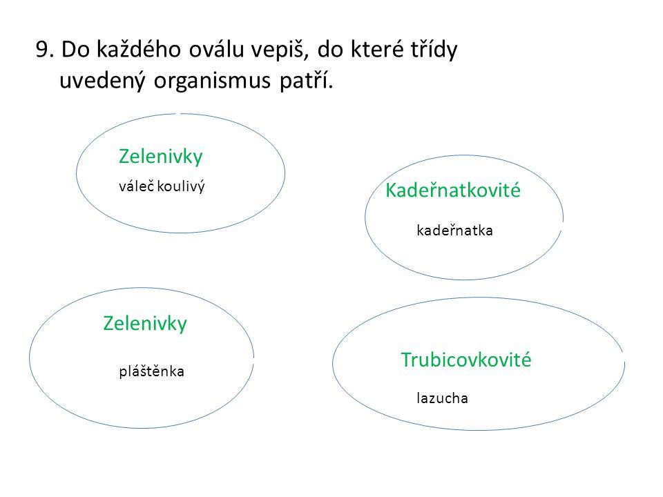 9.Do každého oválu vepiš, do které třídy uvedený organismus patří.