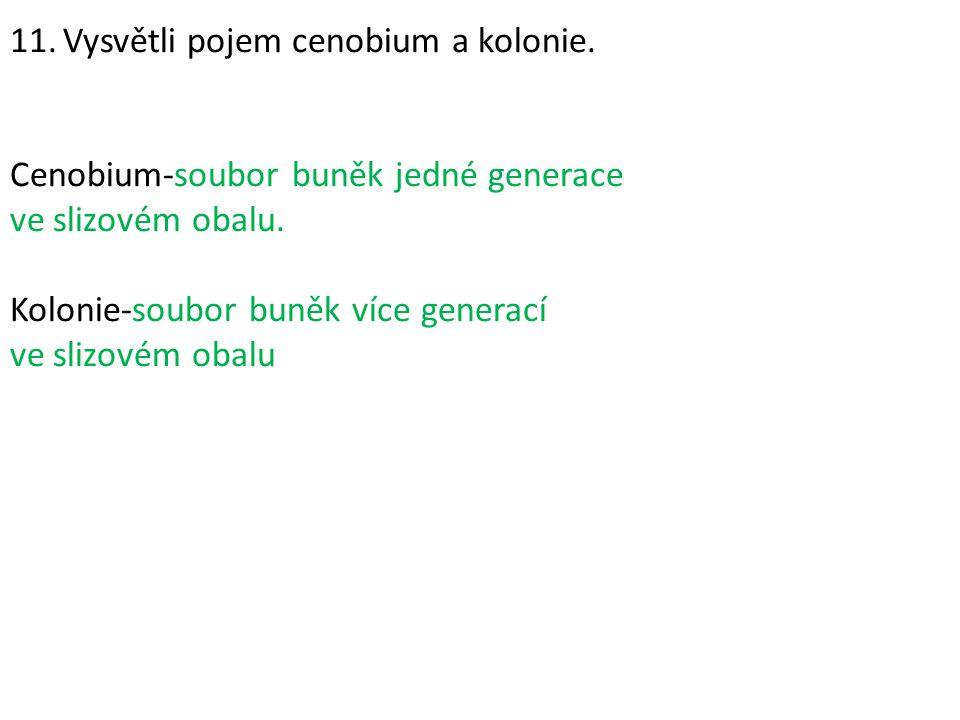 11. Vysvětli pojem cenobium a kolonie. Cenobium-soubor buněk jedné generace ve slizovém obalu. Kolonie-soubor buněk více generací ve slizovém obalu
