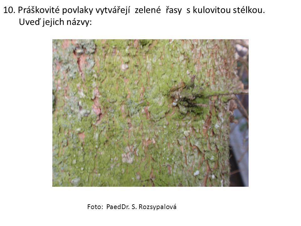 10. Práškovité povlaky vytvářejí zelené řasy s kulovitou stélkou. Uveď jejich názvy: Foto: PaedDr. S. Rozsypalová